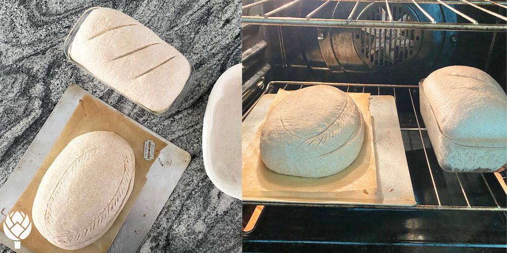 Lily's Sourdough Bread Scoring